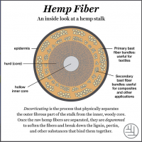 Cross section of a hemp stalk outlining its anatomy.